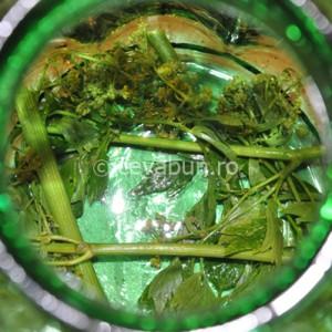 Puneţi un strat de verdeaţă pe fundul borcanului